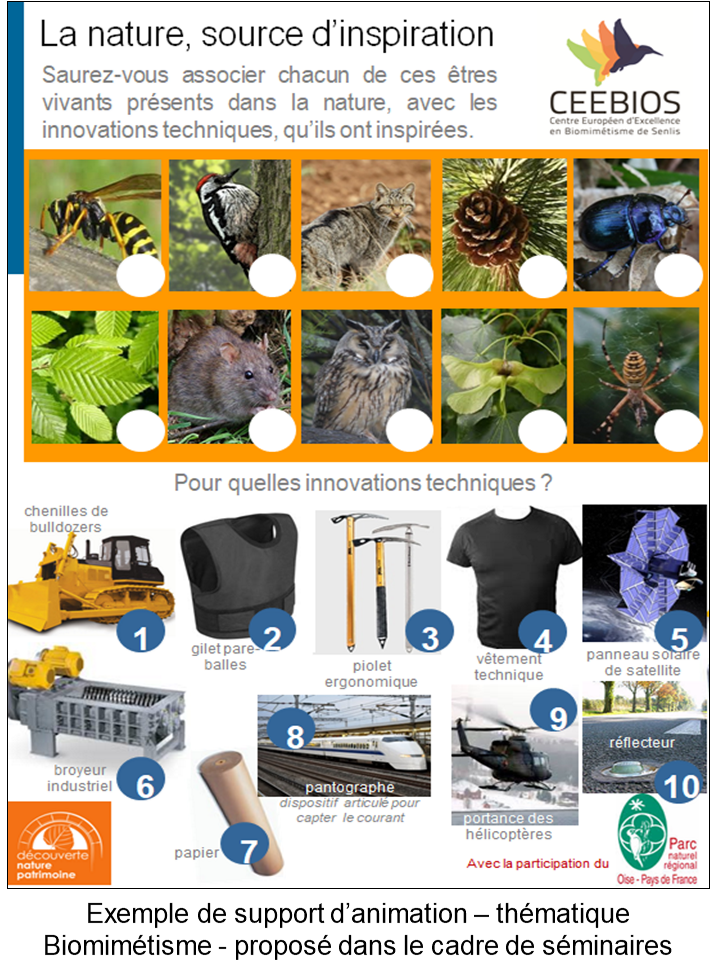 Exemple de support d'animation – thématique Biomimétisme - proposé dans le cadre de séminaires.